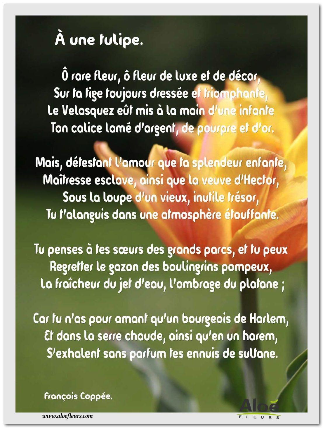 Les Poèmes De Fleurs En Images Par Aloé Fleurs | Fleurs serapportantà Poeme Les Fleurs