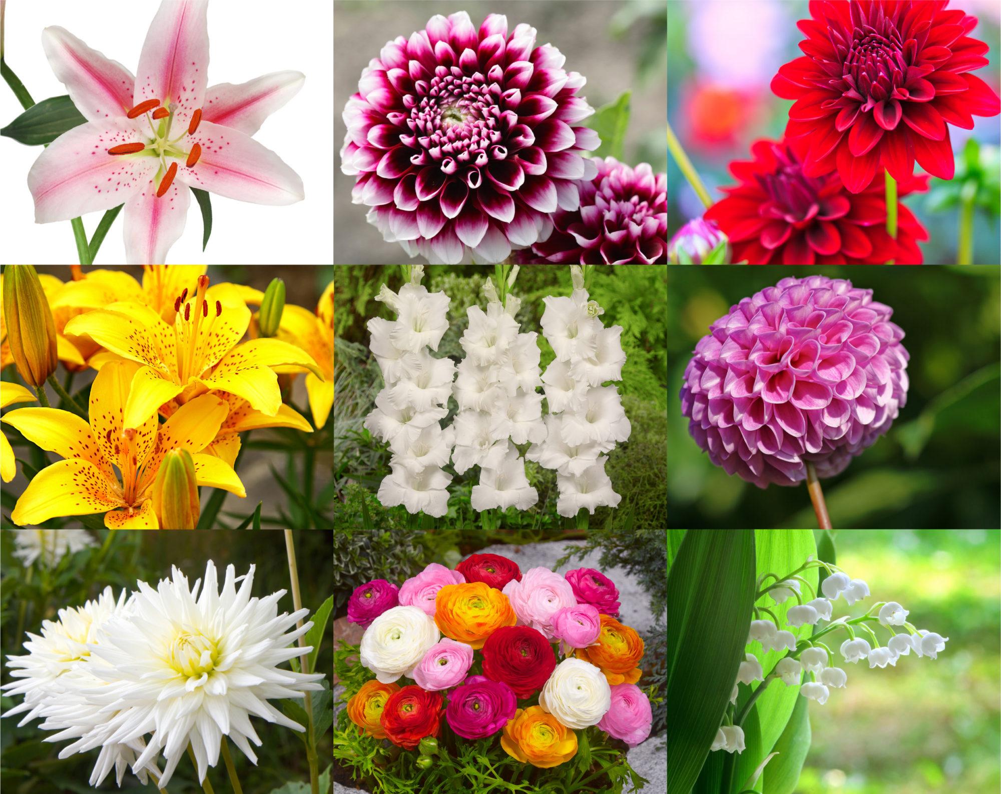Les Principaux Bulbes De Fleurs De Printemps Et D'été pour Fleur Qui Pousse Au Printemps