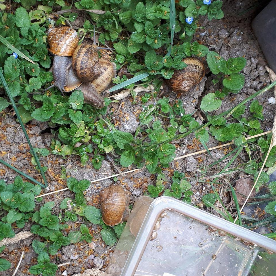 L'escargot De La Ferme Du Lomont: Elevage, Transformation intérieur Elevage Escargot