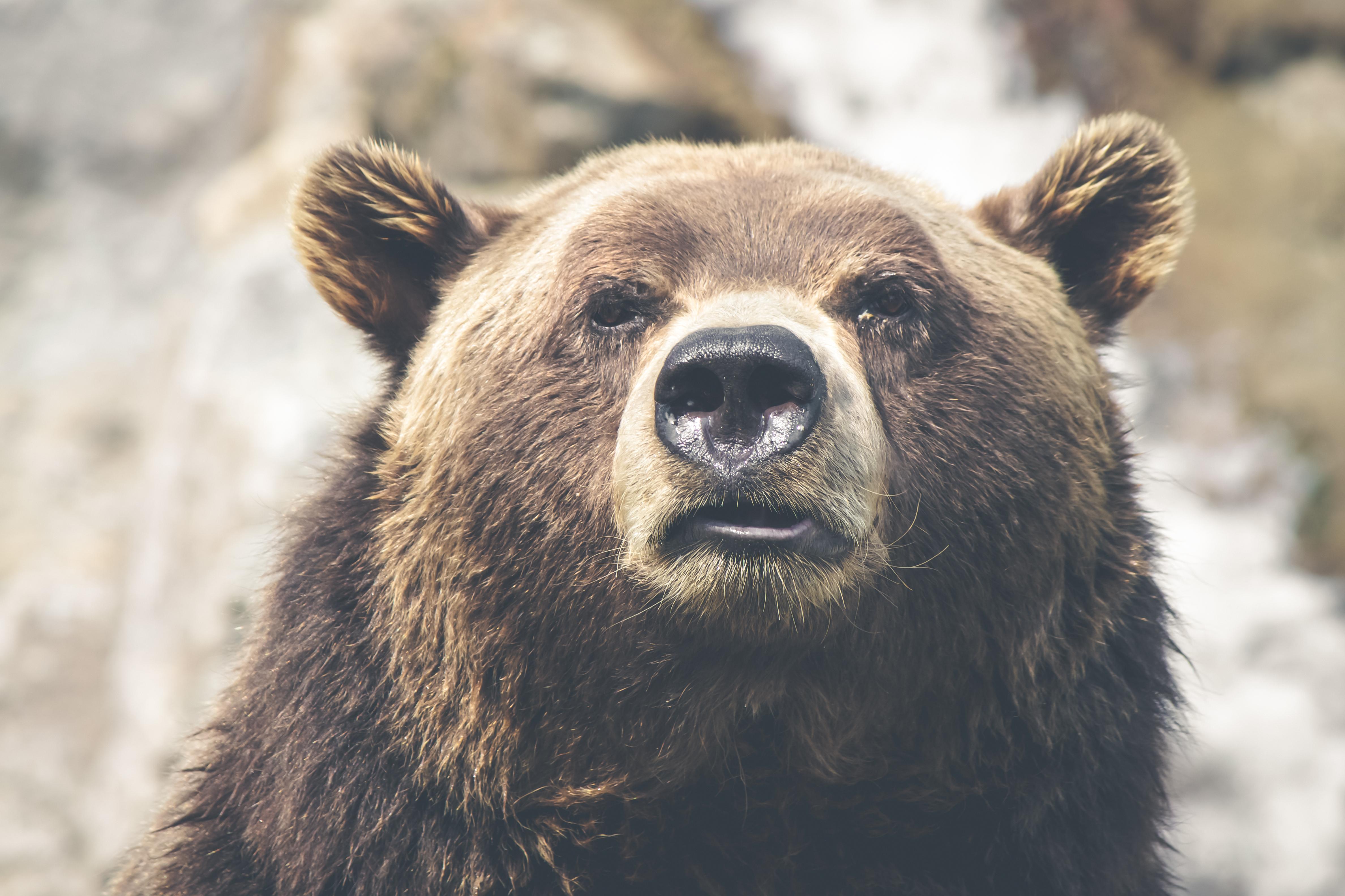 Liberté Pour Les Ours ! - La Fondation Droit Animal, Ethique concernant Ours Savant