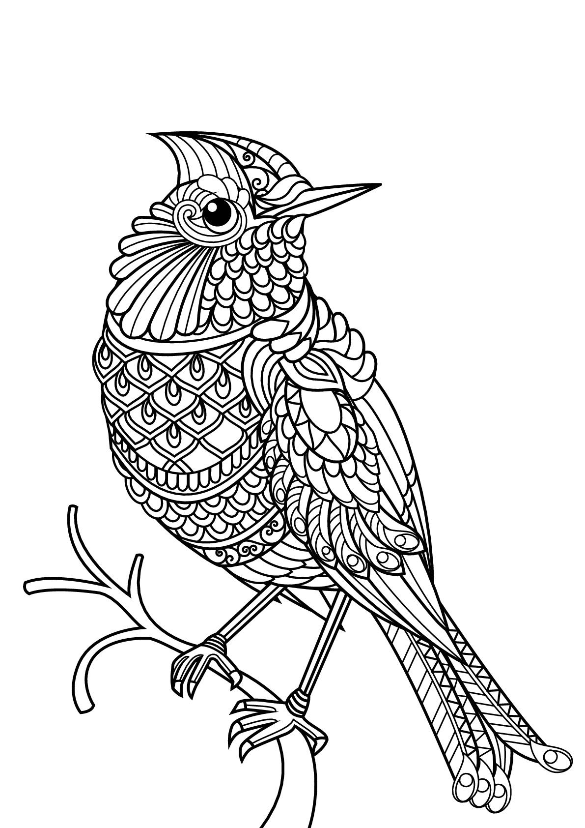 Livre Gratuit Oiseau - Oiseaux - Coloriages Difficiles Pour encequiconcerne Images D Oiseaux Gratuites