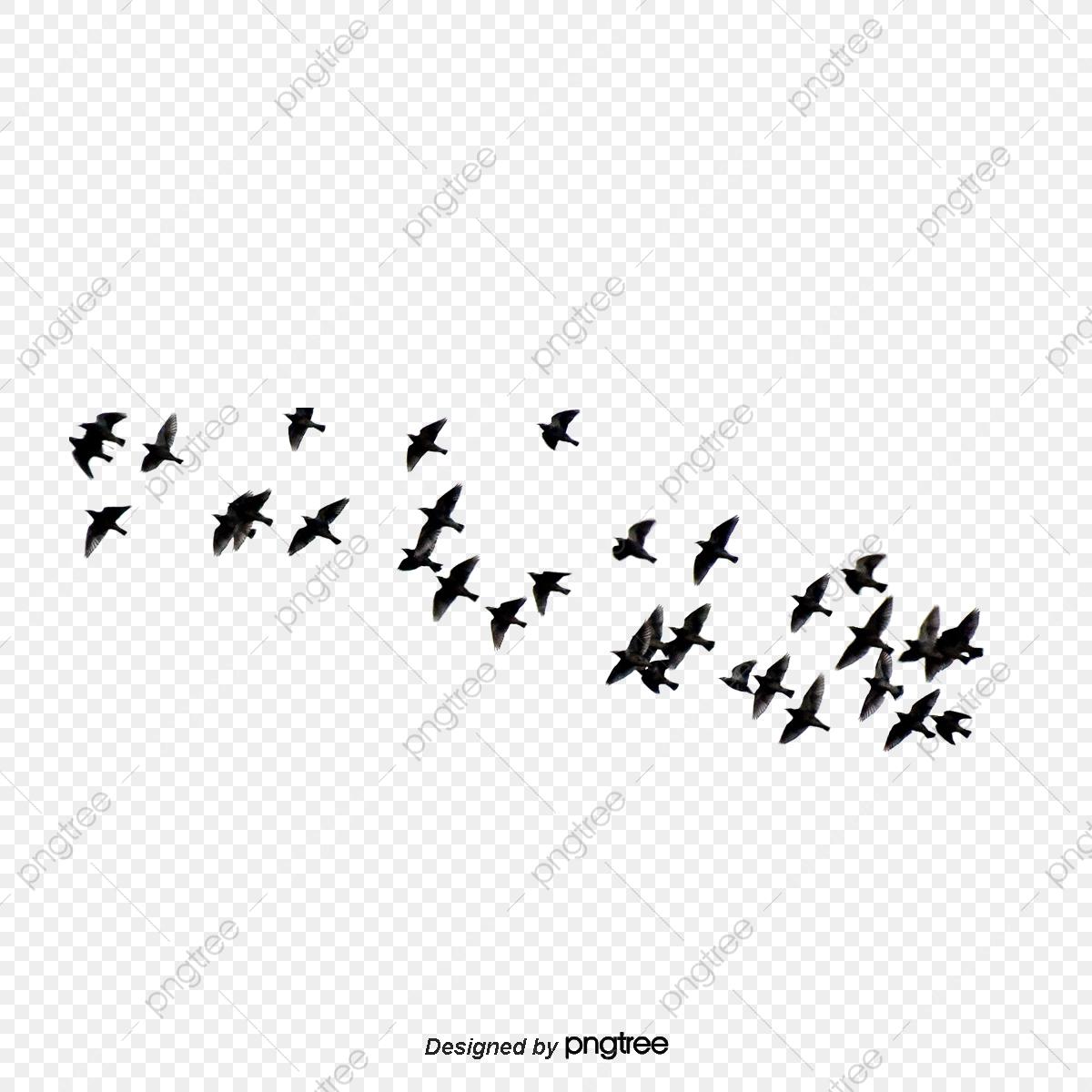 L'oiseau Vole, Voler, Petit Oiseau, Les Oiseaux Fichier Png concernant Vol Petit Oiseau