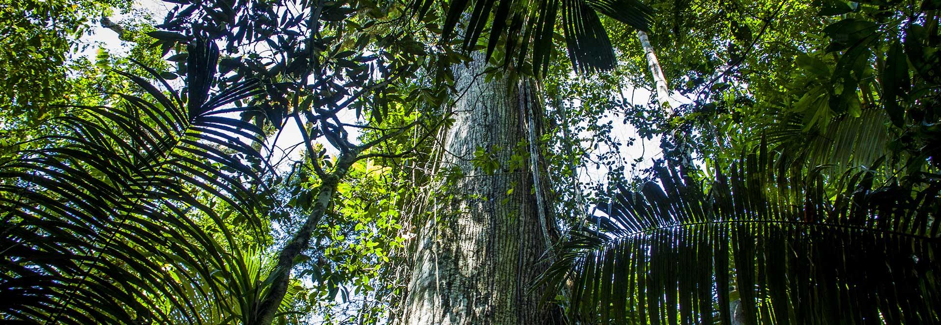Meilleurs Tours Amazonie Equateur 5 Aventures Uniques Jungle tout Dauphin Amazonie