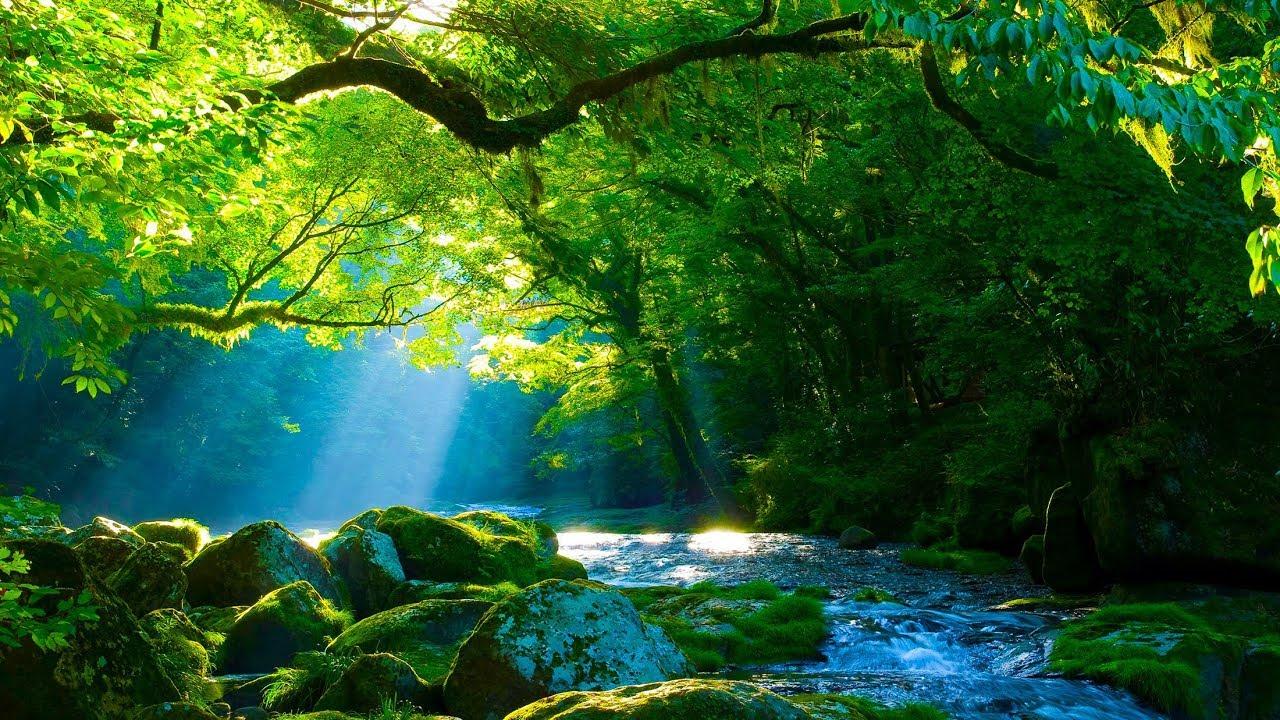 Musique Relaxante Harpe Et Nature - Relaxation à Image Relaxante