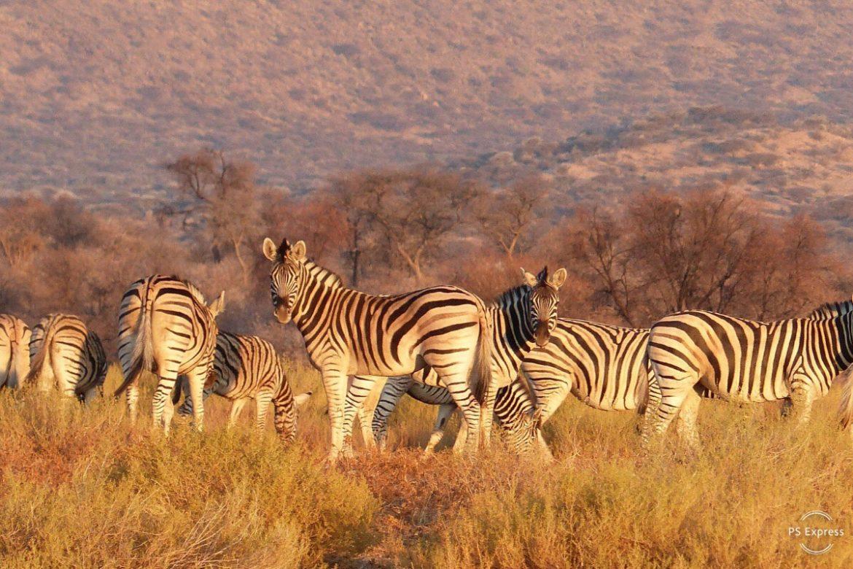 Namibie : Écovolontariat Dans Un Refuge Pour Animaux à Animaux Sauvages De L Afrique