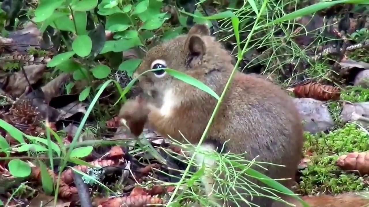 #nature Les Animaux Sauvages De La #forêt Canadienne à Image D Animaux De La Foret