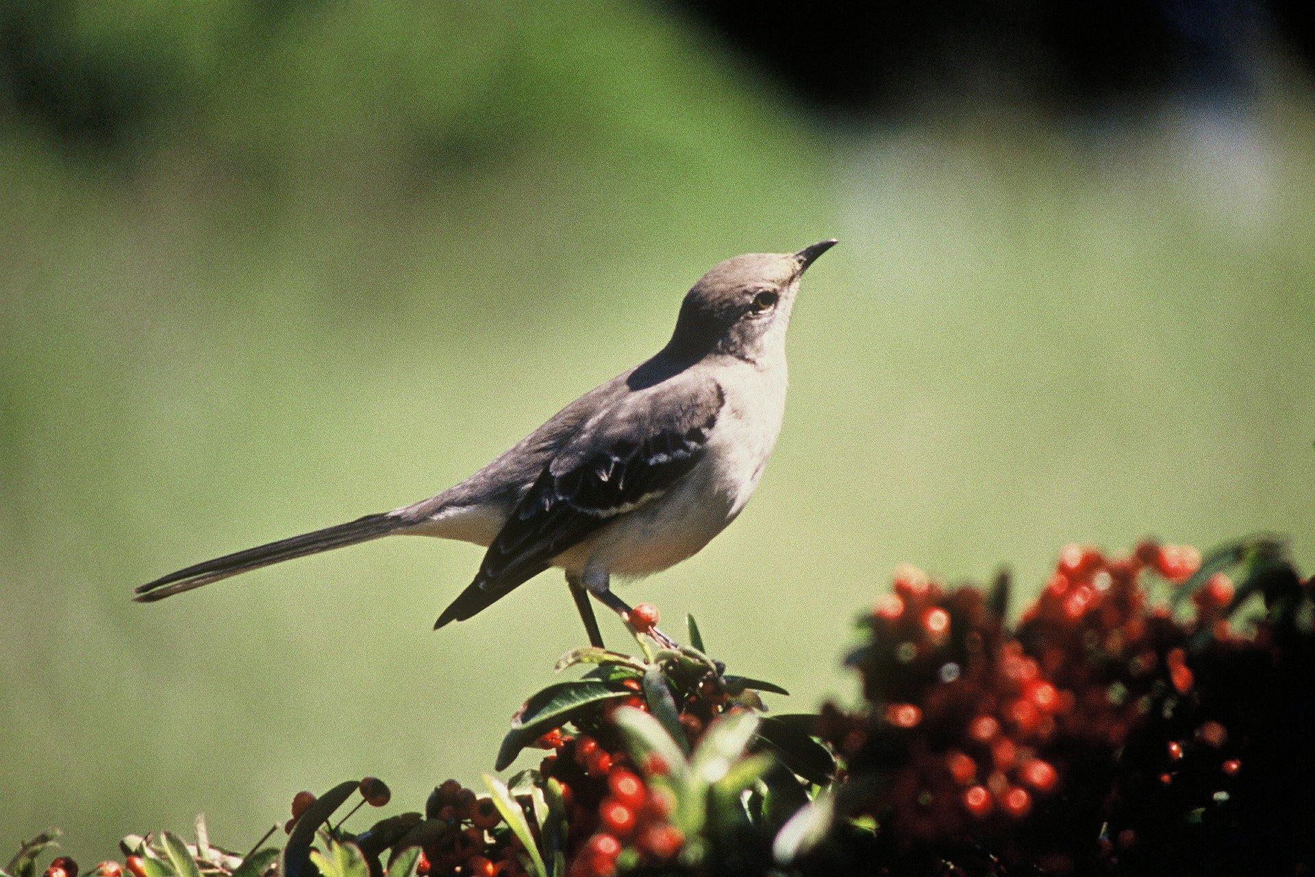 Naturelax: Oiseaux Du Paradis, Mp3 Sons De La Nature Gratuit -  Forcemajeure destiné Images D Oiseaux Gratuites
