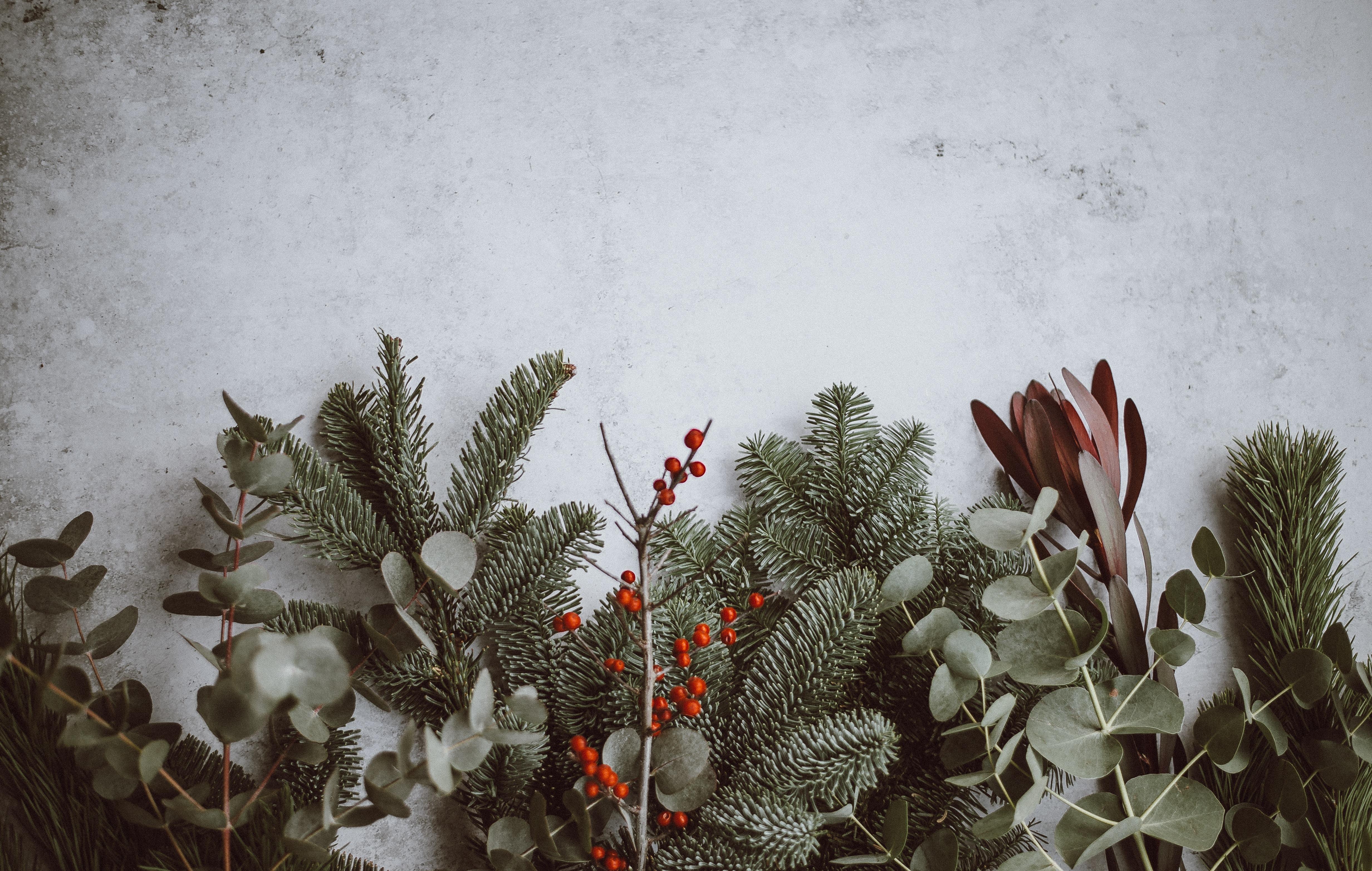 Noel – Caillou serapportantà Caillou Fete Noel