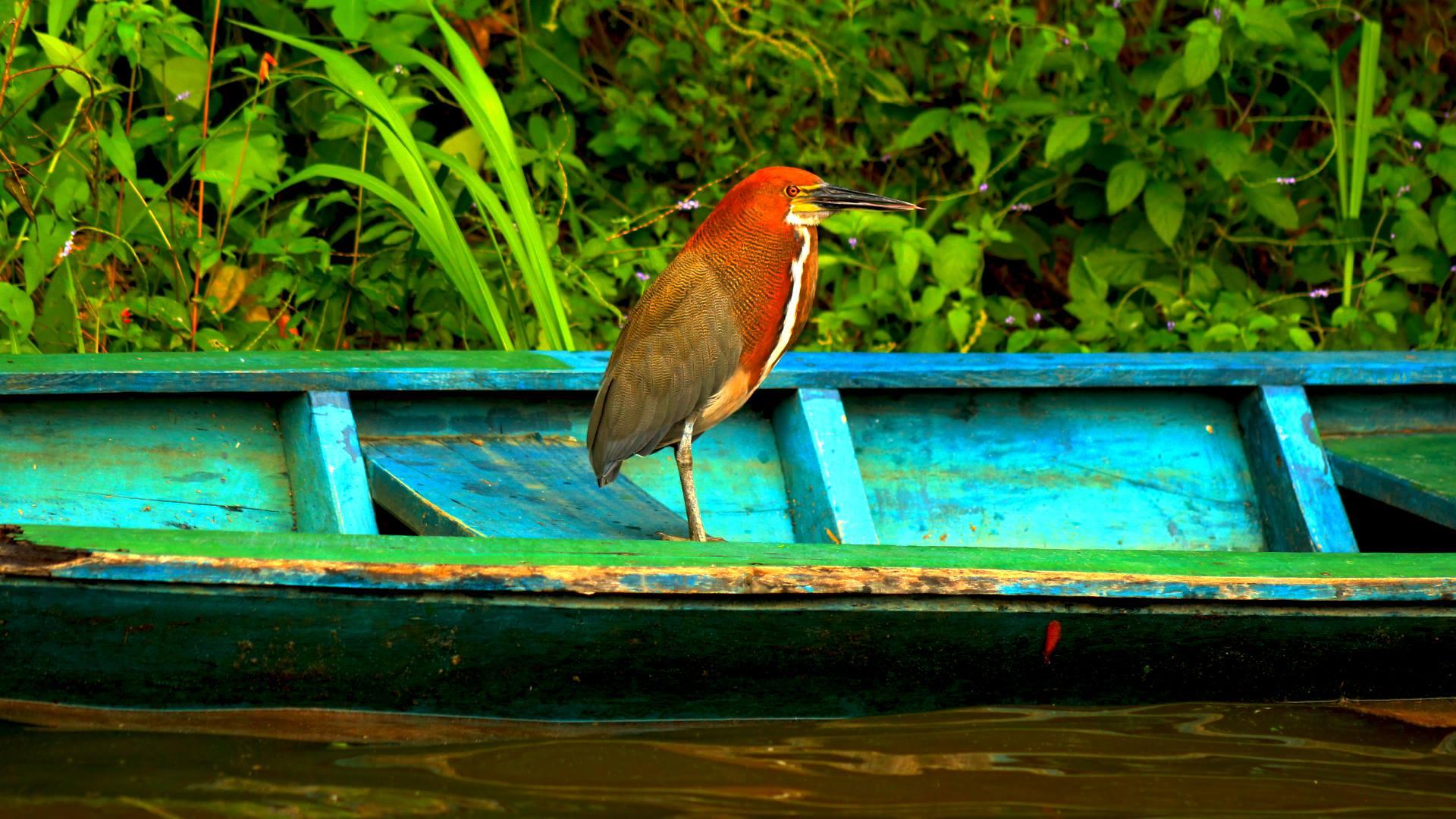 Nos Projets – Concession De Conservation Yanayacu-Maquia En intérieur Dauphin Amazonie