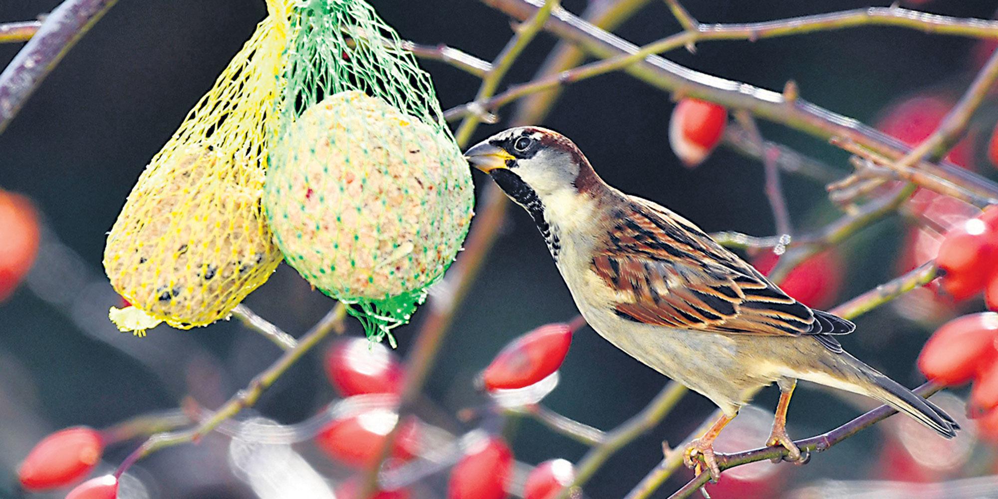 """Nourrir Les Oiseaux Sauvages, """"un Antidépresseur Gratuit"""" concernant Images D Oiseaux Gratuites"""