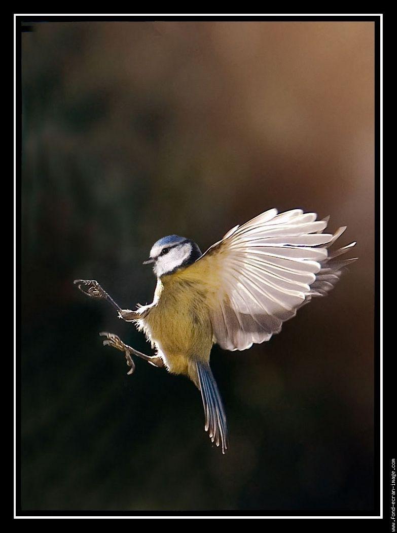 Oiseau En Plein Vol tout Vol Petit Oiseau