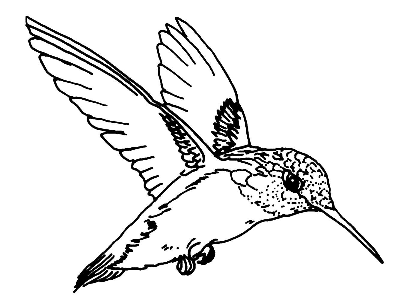 Oiseau En Vol - Coloriage D'oiseaux - Coloriages Pour Enfants à Vol Petit Oiseau