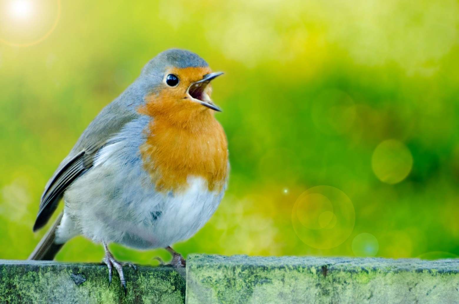 Oiseau Le Merle Images Photos Gratuites | Images Gratuites intérieur Images D Oiseaux Gratuites
