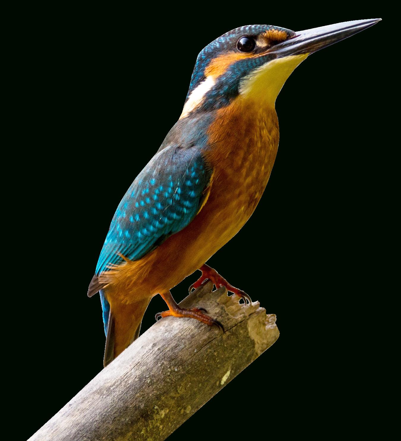 Oiseau Telecharger Gratuit Png | Png Play concernant Images D Oiseaux Gratuites