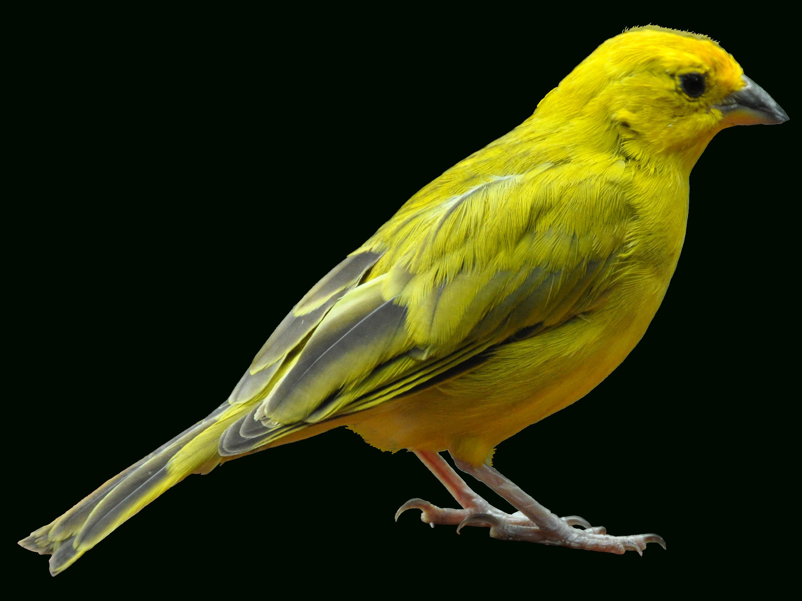 Oiseau Transparentes Gratuit Png | Png Play tout Images D Oiseaux Gratuites