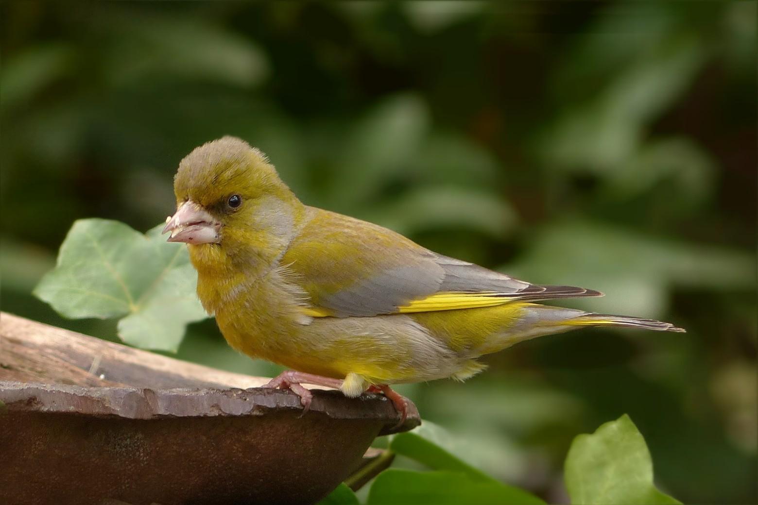 Oiseaux Images Photos Gratuites Libres De Droits | Images serapportantà Images D Oiseaux Gratuites
