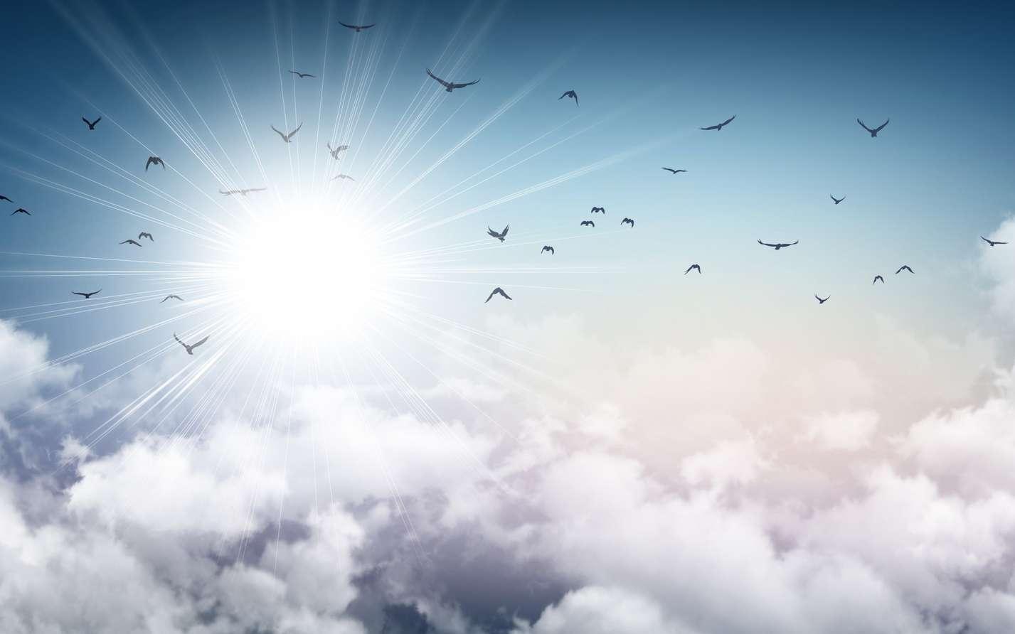 Oiseaux : Jusqu'à Quelle Altitude Peuvent-Ils Voler ? dedans Vol Petit Oiseau
