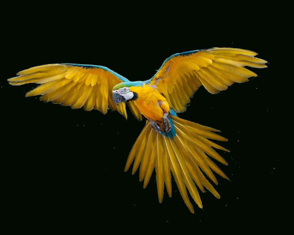 Oiseaux - Perroquet - Render-Tube - Gratuit - Le Blog De tout Images D Oiseaux Gratuites
