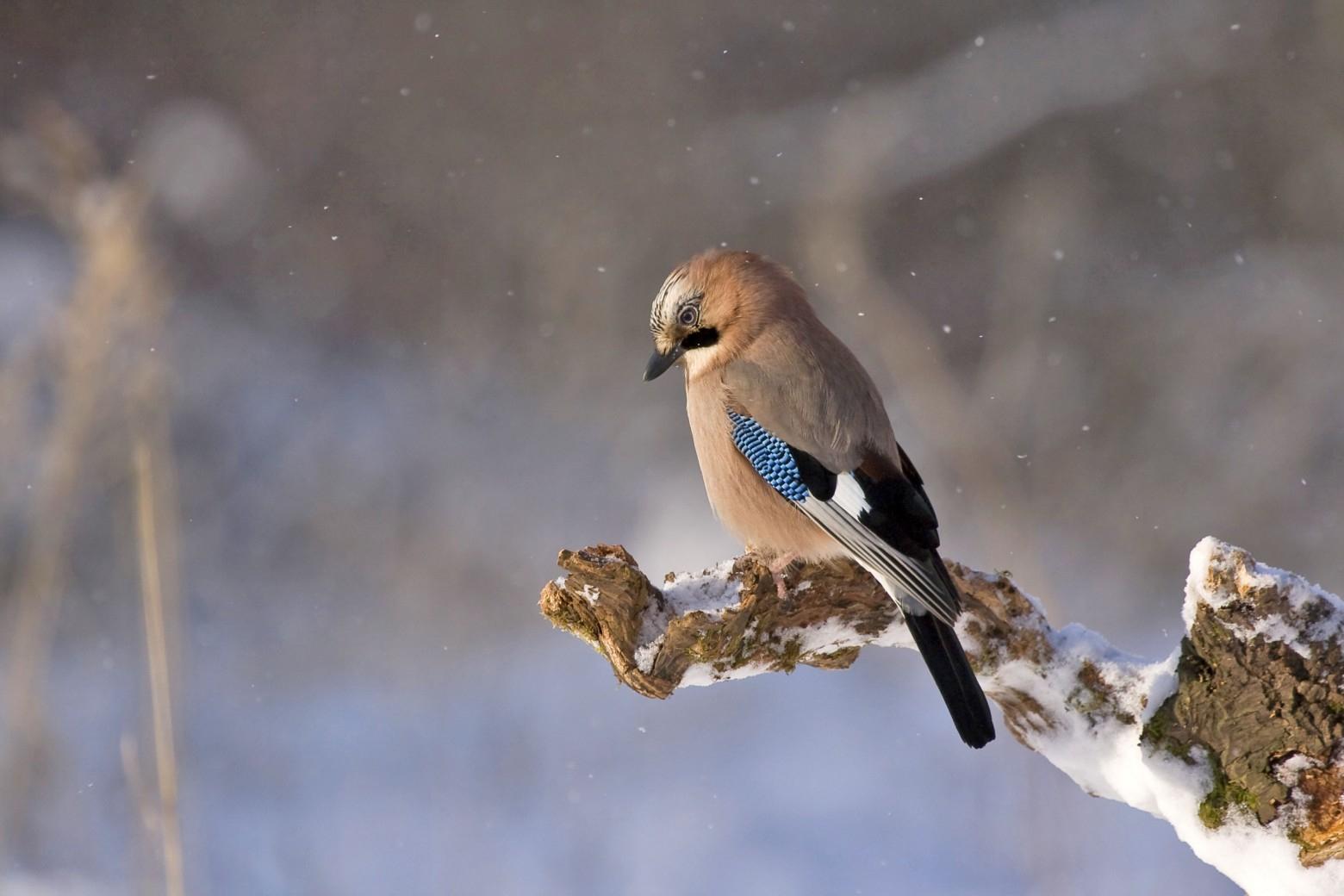 Oiseaux Photos Gratuites | Images Gratuites Et Libres De Droits serapportantà Images D Oiseaux Gratuites
