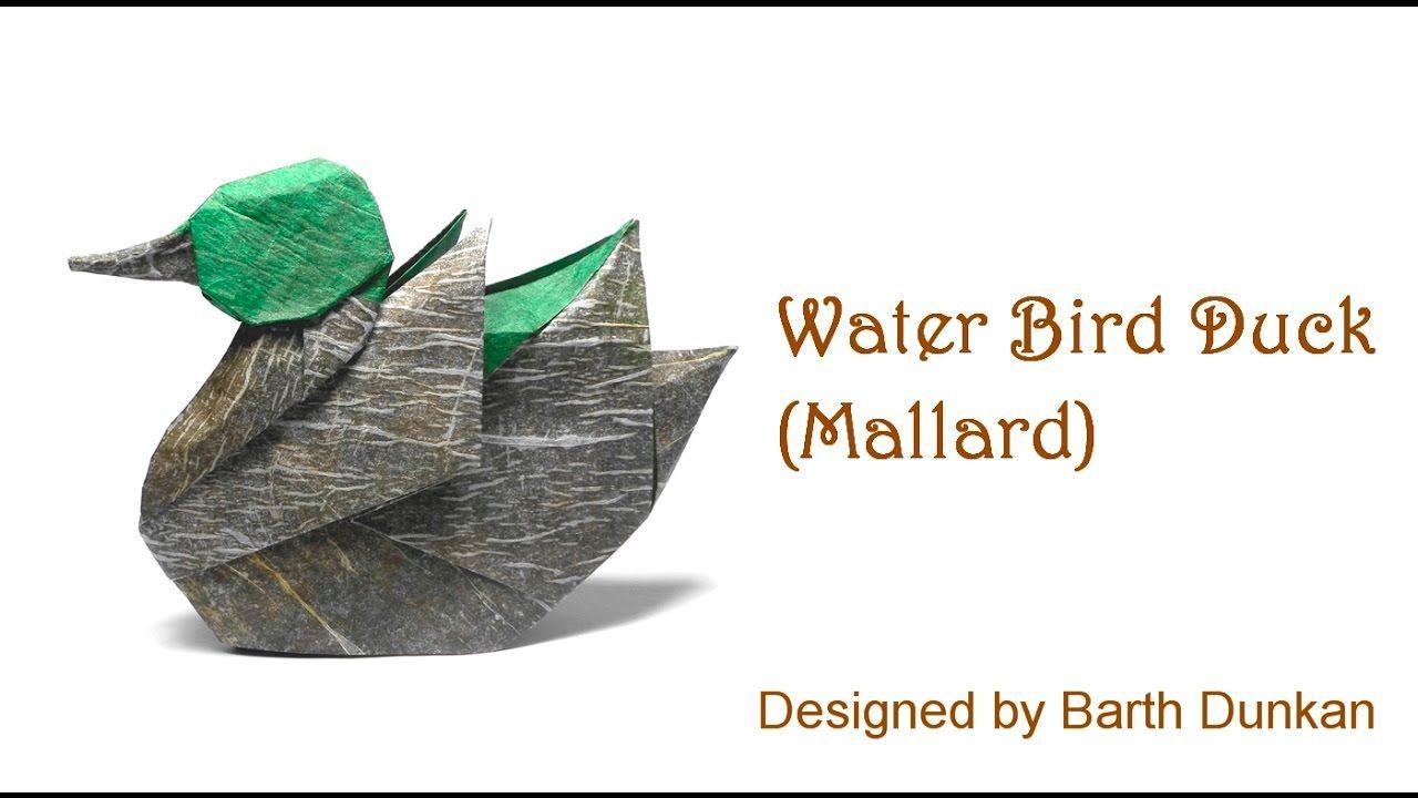 Origami Water Bird Duck - Mallard Tutorial (Barth Dunkan intérieur Origami Canard