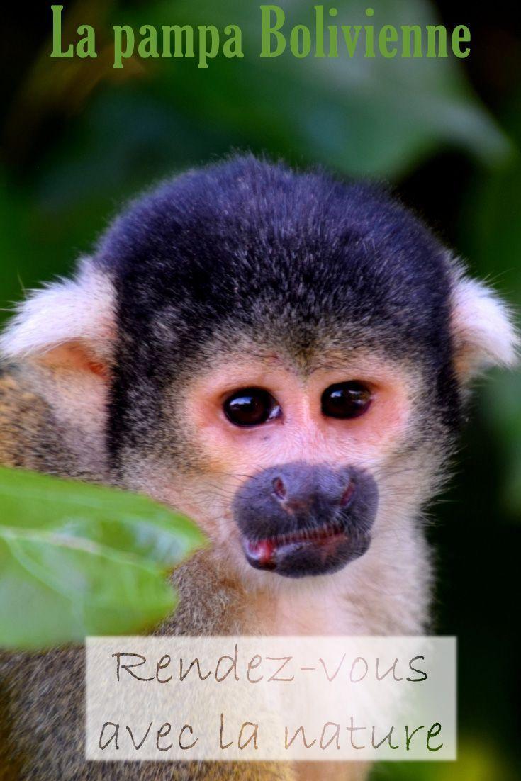 Parc National Madidi: 3 Jours En Amazonie | Bolivie, Pampa à Dauphin Amazonie