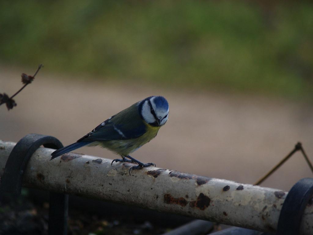 Petit Oiseau Si Tu N'as Pas D'ailes Ah Tu Ne Peux Pas Vol encequiconcerne Vol Petit Oiseau