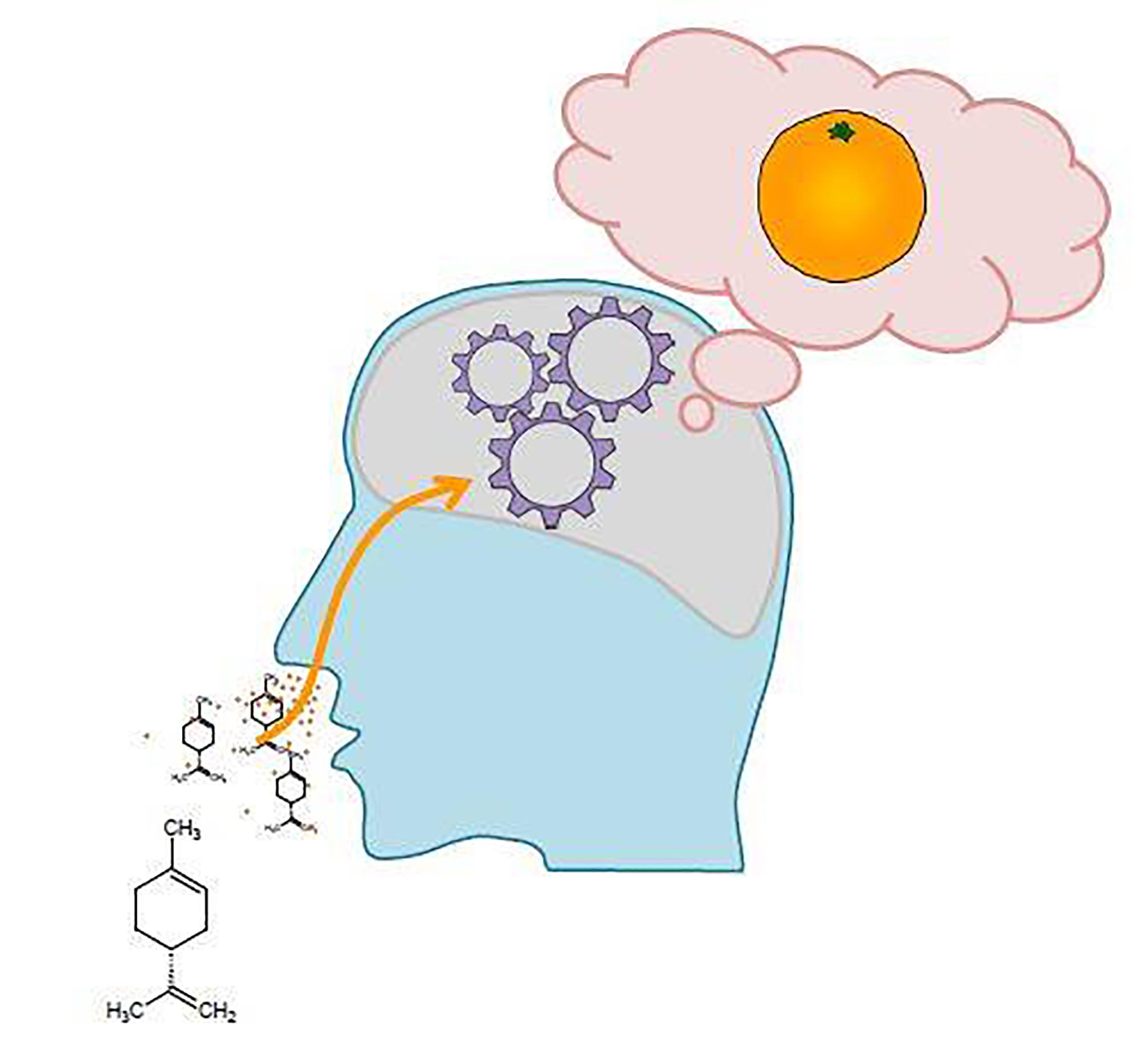 Peut-On Prédire L'odeur D'une Molécule Sur Base De Sa dedans Sens Olfactif
