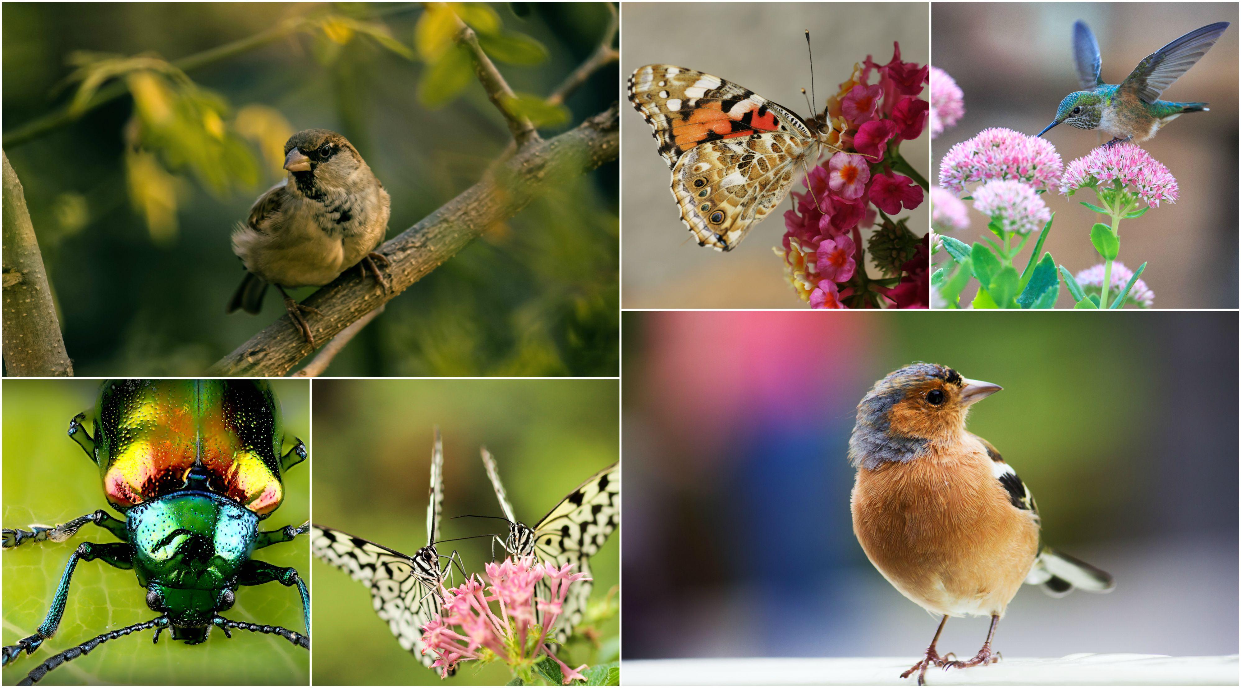 Photos (1) : Oiseaux Et Papillons destiné Images D Oiseaux Gratuites