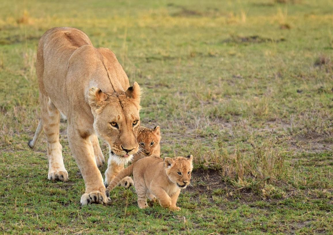 Photos : Les Familles D'animaux Sauvages Dans La Savane dedans Animaux Sauvages De L Afrique