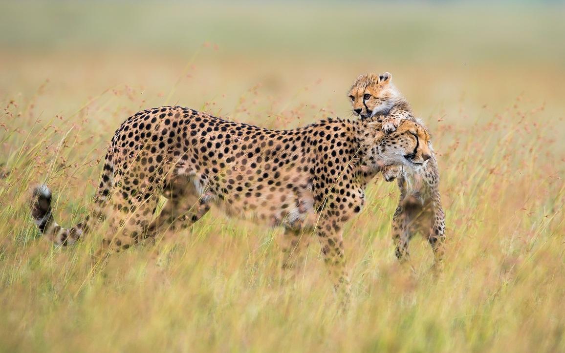 Photos : Les Familles D'animaux Sauvages Dans La Savane tout Animaux Sauvages De L Afrique