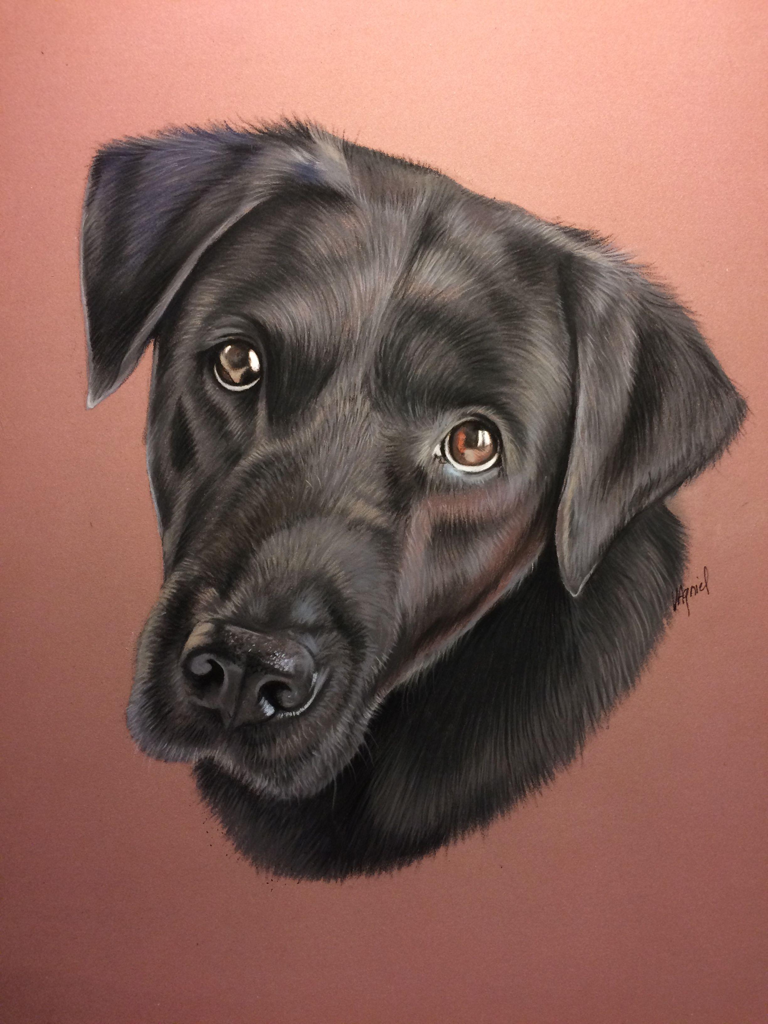 Portrait De Labrador Noir, Réalisé Au Pastel | Labrador Noir intérieur Coloriage Labrador