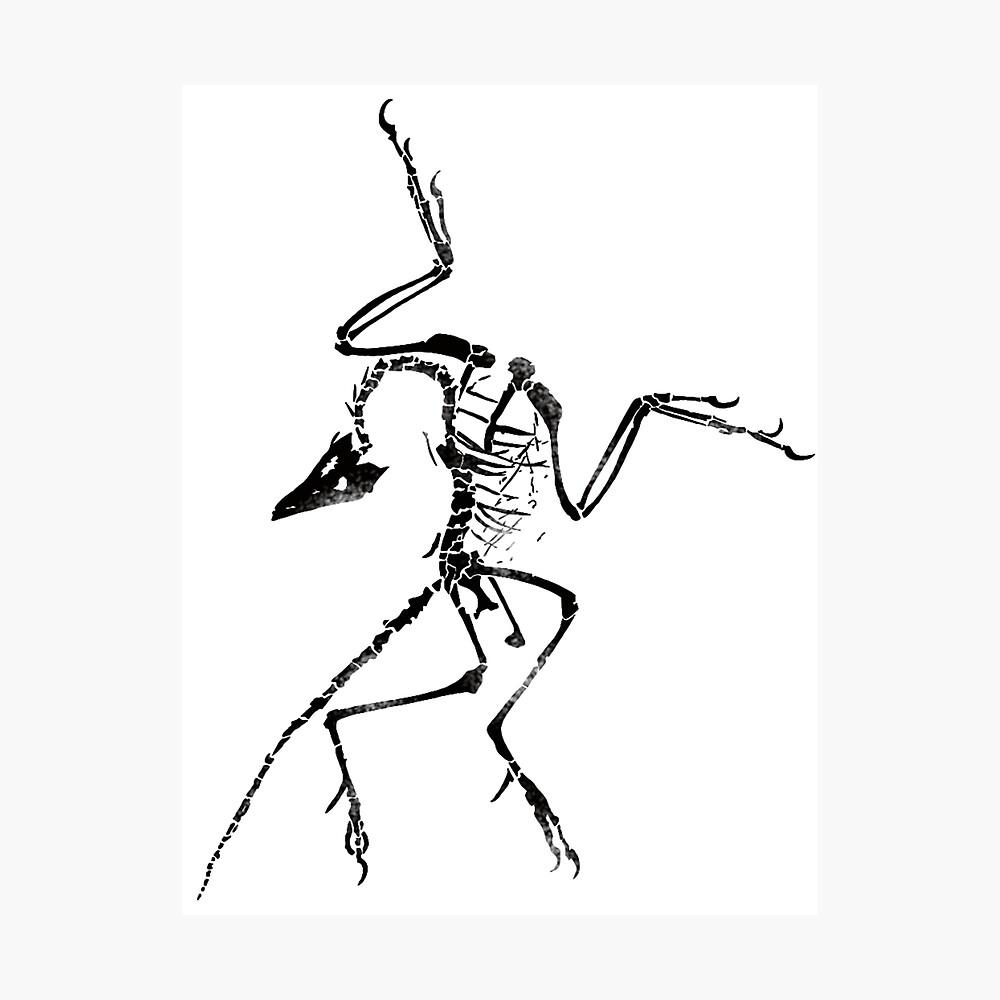 Poster « Archéoptéryx Squelette Imprimer », Par Jjjericho avec Squelette A Imprimer
