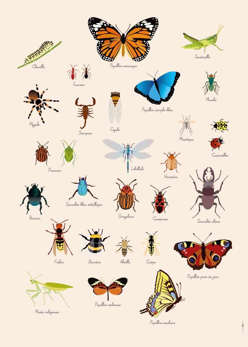 Poster Géant Plastifié : Insectes | Poster, Poster Geant destiné Les Noms Des Insectes