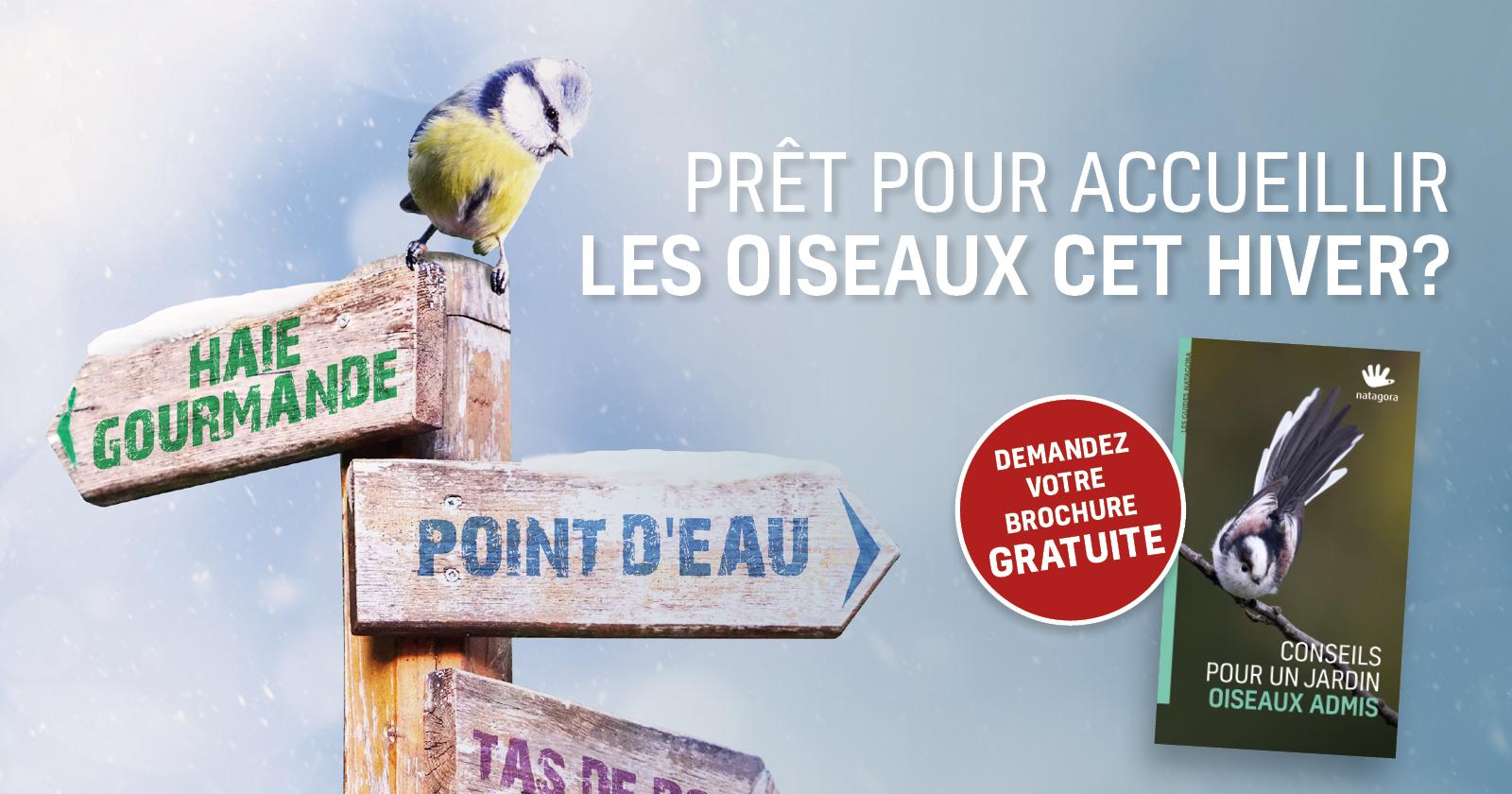 Prêt Pour Accueillir Les Oiseaux Cet Hiver ? | Natagora dedans Images D Oiseaux Gratuites