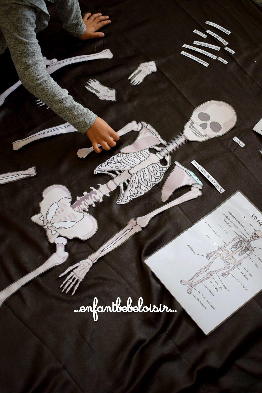 Puzzle Des Os De Squelette A Reconstituer - 1 Mètre - À à Squelette A Imprimer
