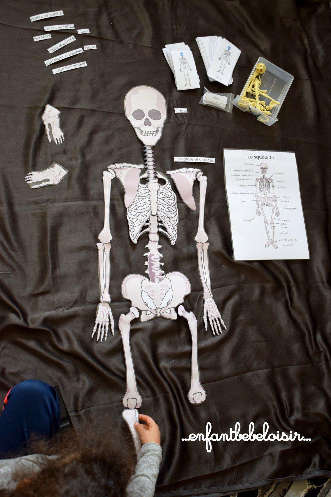 Puzzle Des Os De Squelette A Reconstituer - 1 Mètre - À avec Squelette A Imprimer