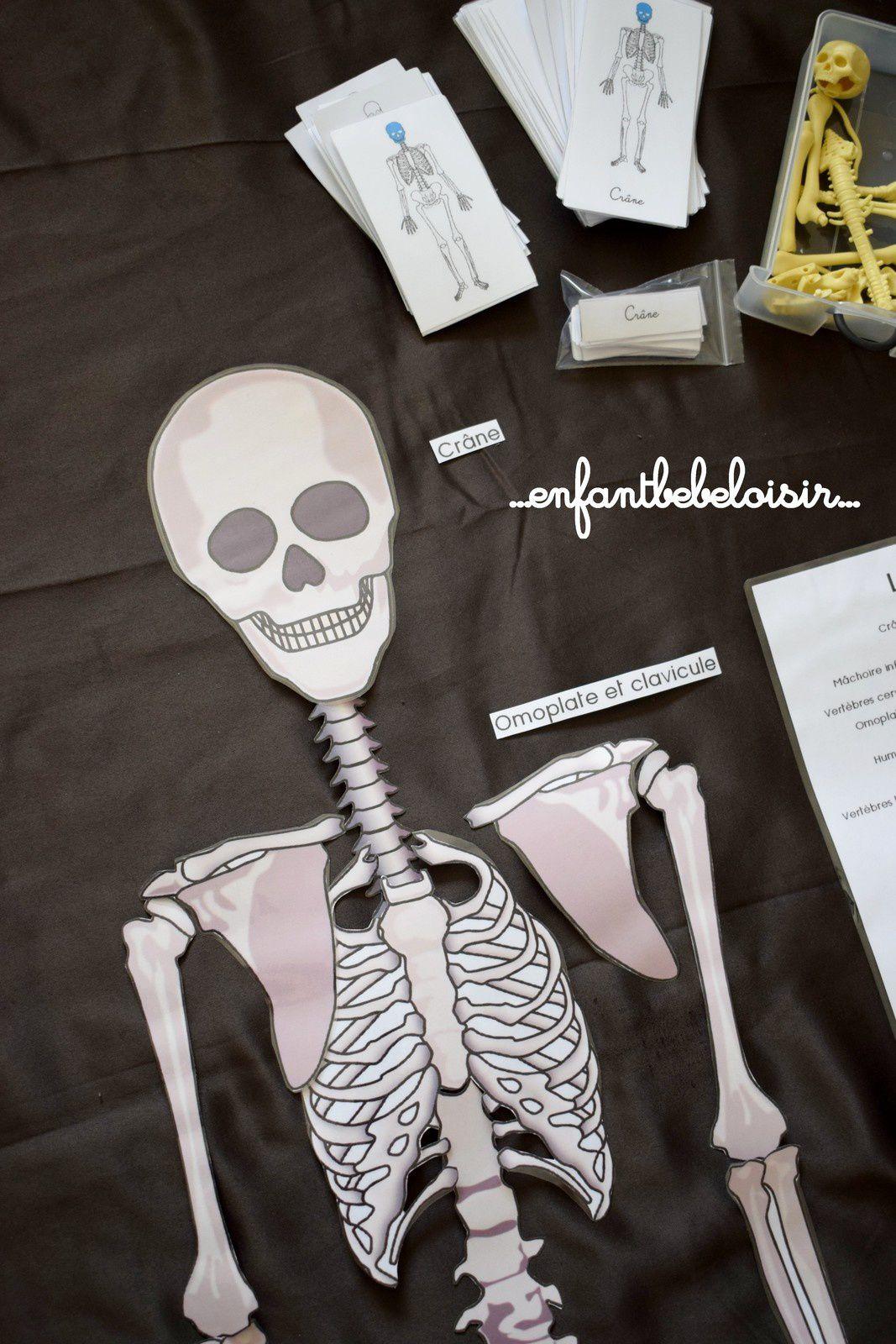 Puzzle Des Os De Squelette A Reconstituer - 1 Mètre - À encequiconcerne Squelette A Imprimer