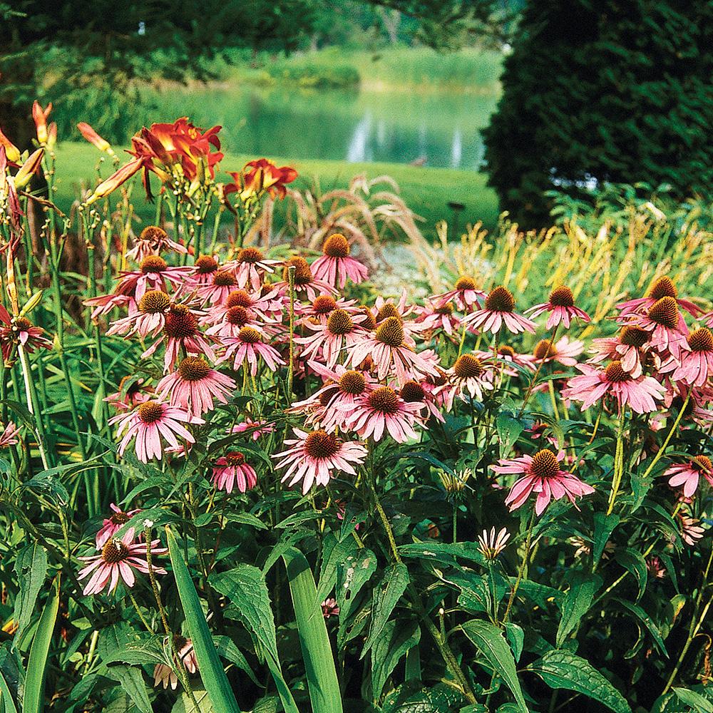 Quand Et Comment Tailler Les Vivaces? - Je Jardine avec Fleur Qui Pousse Au Printemps