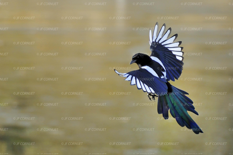 """Quelques Oiseaux En Vol"""" Fête Ses 10 Ans. encequiconcerne Vol Petit Oiseau"""