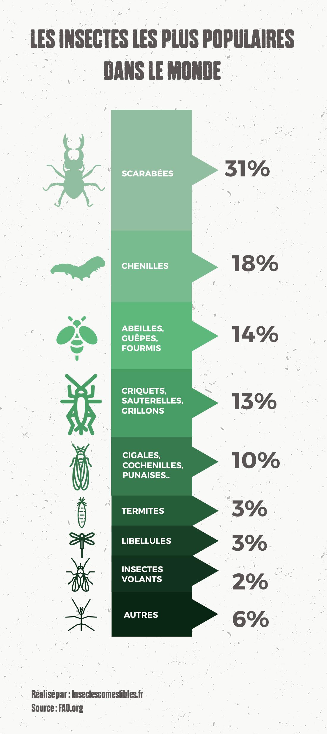 Quels Sont Les Insectes À Manger Les Plus Populaires ? pour Les Noms Des Insectes