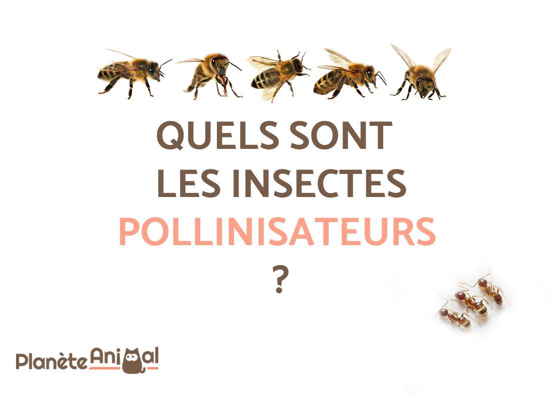 Quels Sont Les Insectes Pollinisateurs ? - À Découvrir 9 serapportantà Les Noms Des Insectes