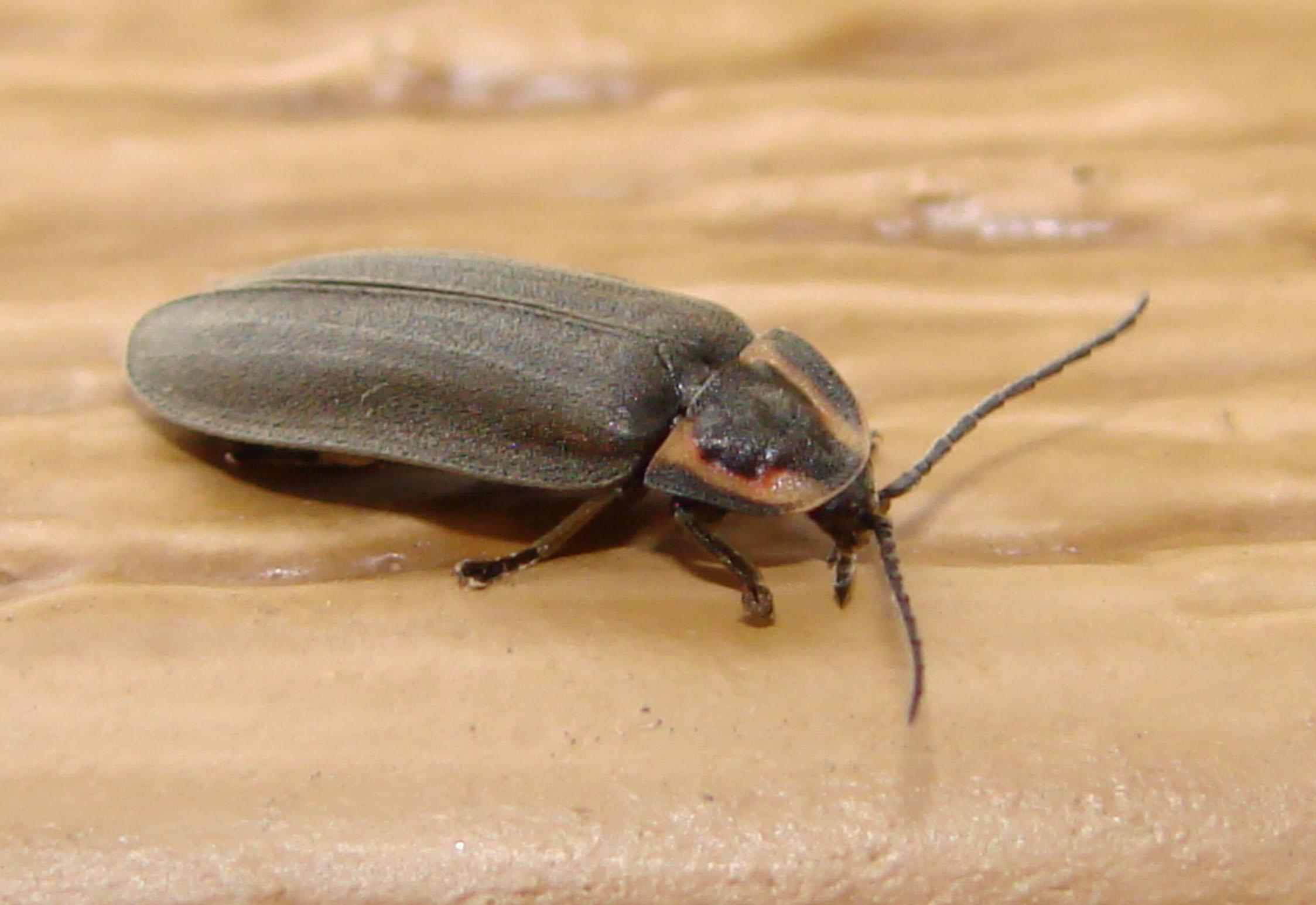 Qu'est-Ce Qu'un Insecte? | Espace Pour La Vie dedans Les Noms Des Insectes
