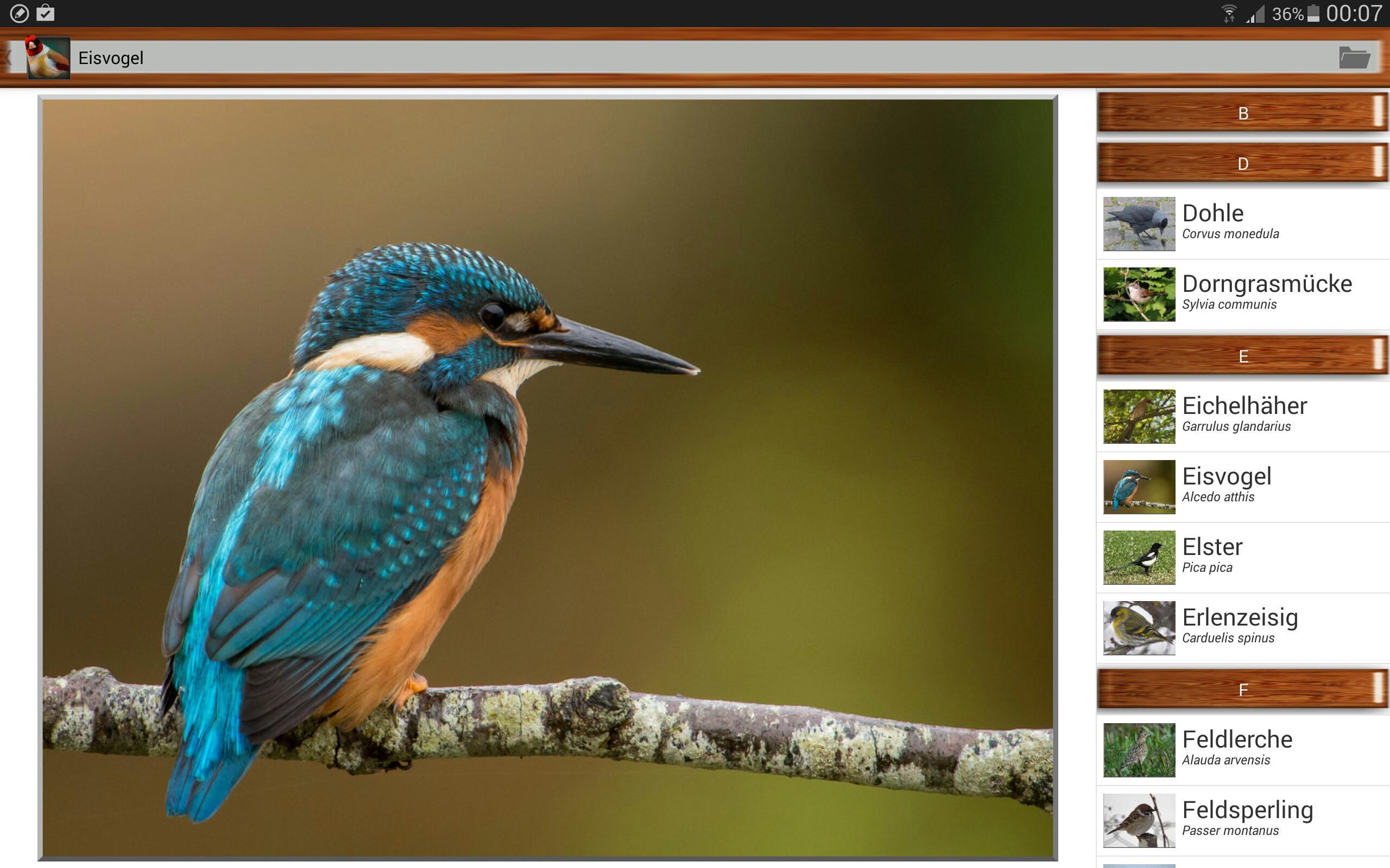 Quiz Sur Les Oiseaux Gratuit Pour Android - Téléchargez L'apk tout Images D Oiseaux Gratuites
