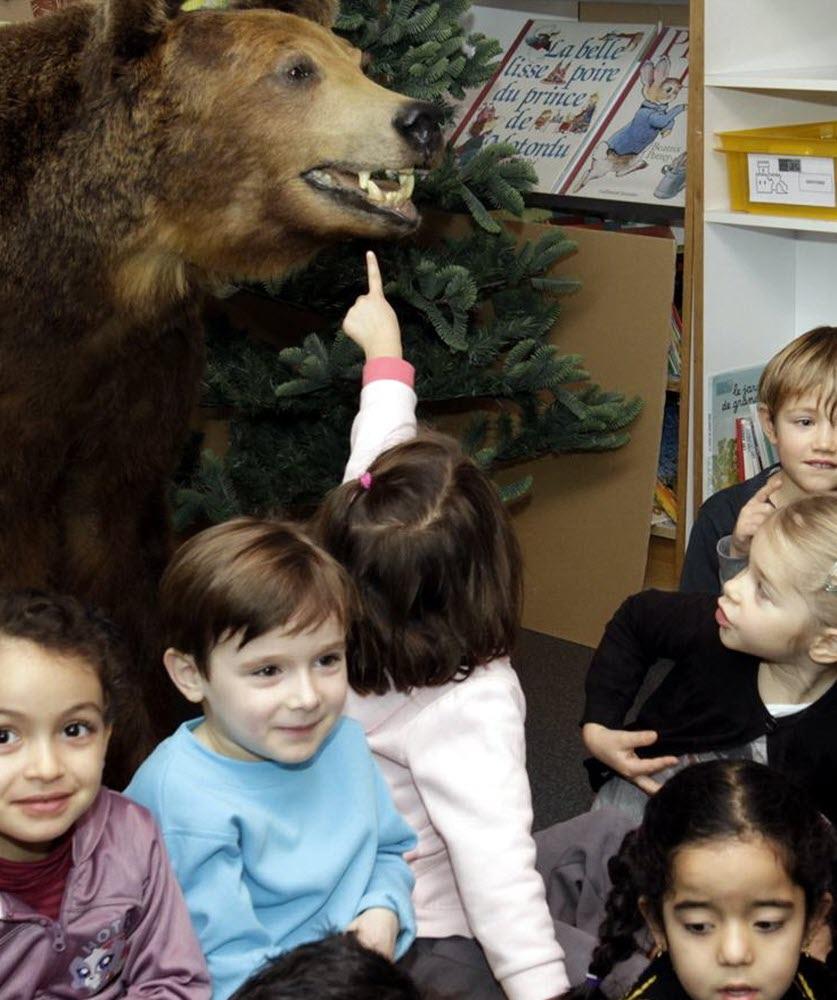 Région   Ours Savant À L'école pour Ours Savant