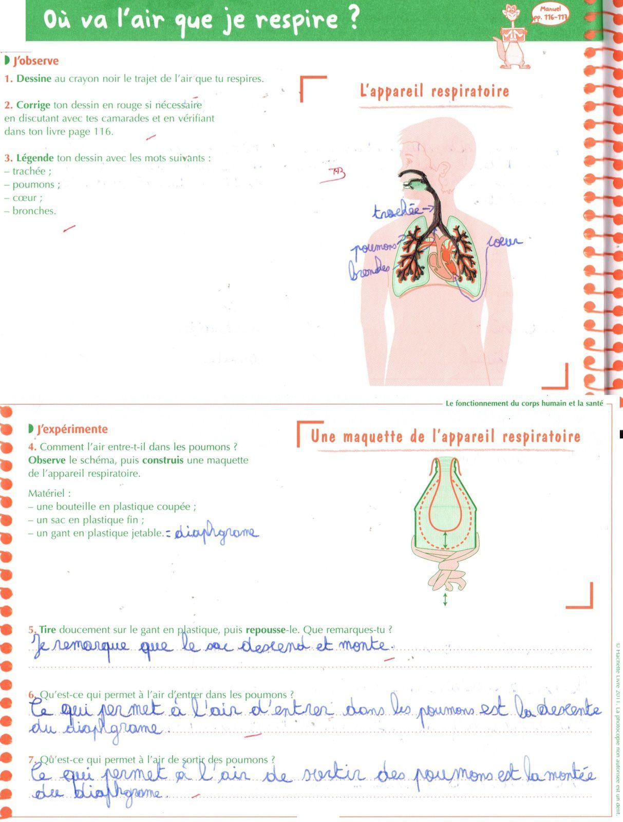 Sciences - Ecole À La Maison 40 pour Leçon Respiration Cm1