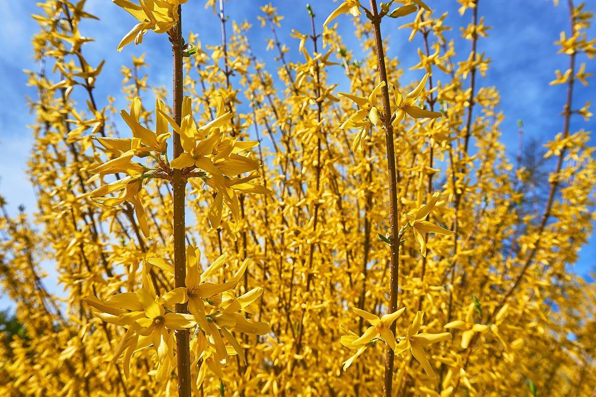 Serveis De Jardineria | Augusto Pires à Fleur Qui Pousse Au Printemps