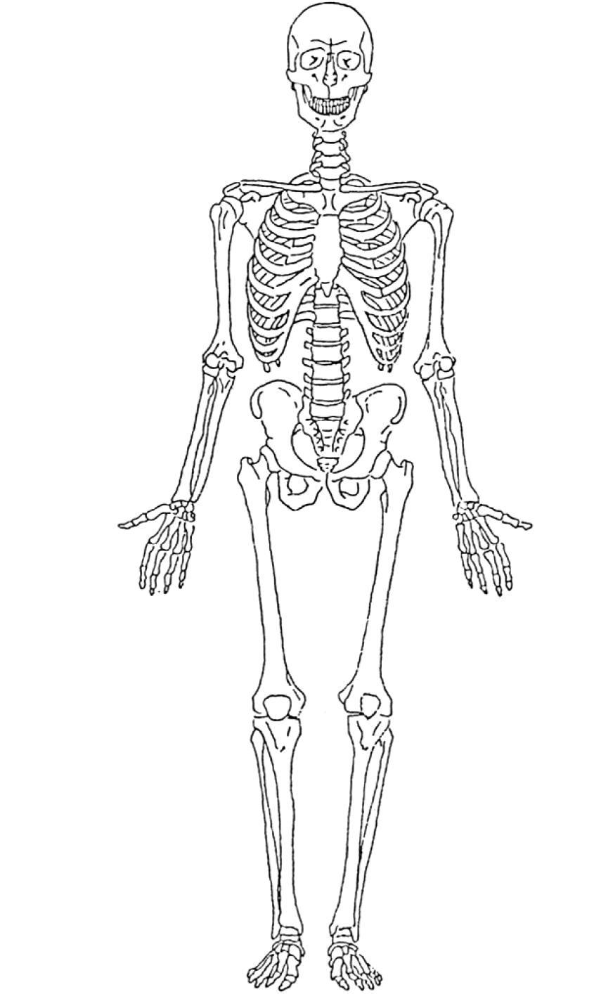 Squelette #17 (Personnages) – Coloriages À Imprimer avec Squelette A Imprimer