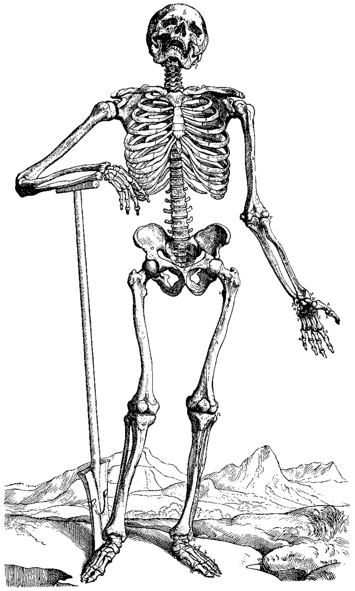 Squelette #31 (Personnages) – Coloriages À Imprimer tout Squelette A Imprimer