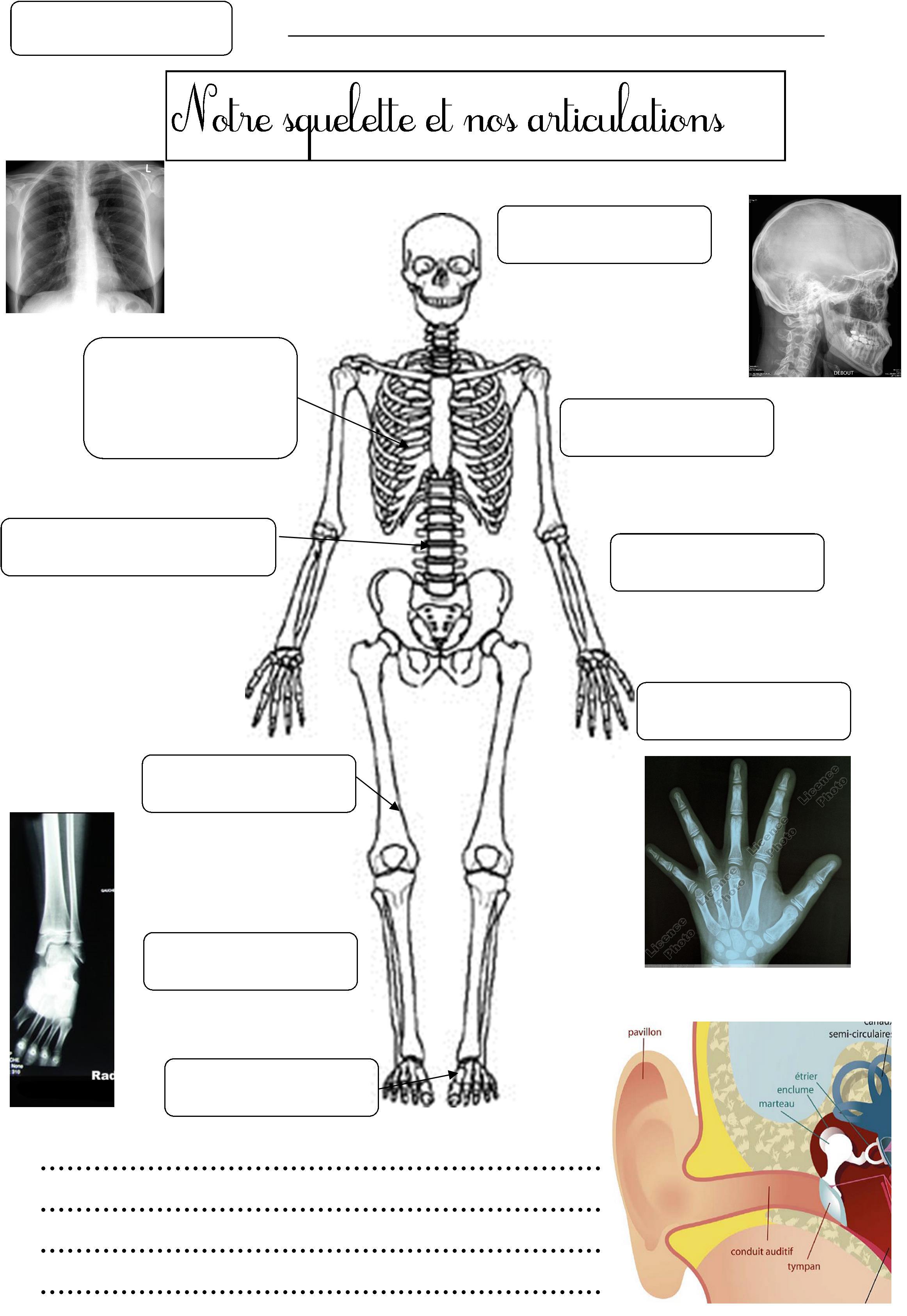 Squelette Et Articulations | Le Blog De Monsieur Mathieu tout Squelette A Imprimer