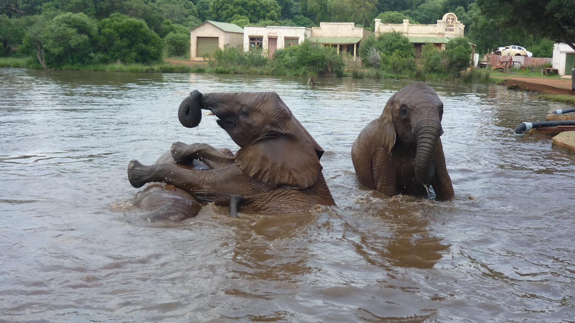 Stage Afrique Du Sud - Ferme Des Animaux concernant Animaux Sauvages De L Afrique